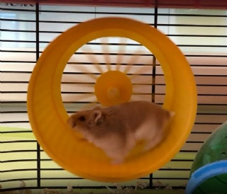 School Hamsters Win Prizes in Pet Show